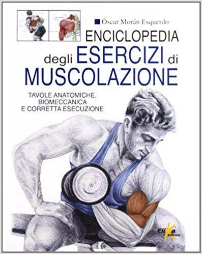 muscoli uomo esercizi