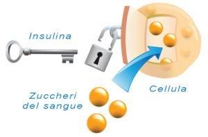 Insulina: Che Cos'È e Come Influenza La Glicemia