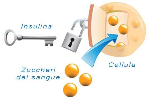 Ormone Insulina: Che Cos'È e Come Influenza La Glicemia