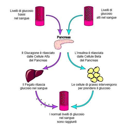 Attività del pancreas e dell' insulina
