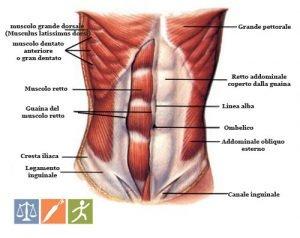 Muscoli Addominali: Anatomia e Funzioni