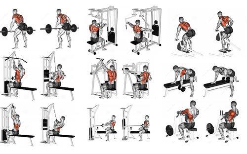 Esercizi per i muscoli della schiena
